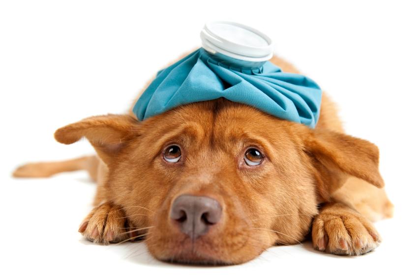 Čo môže ohroziť zdravie nášho psa?